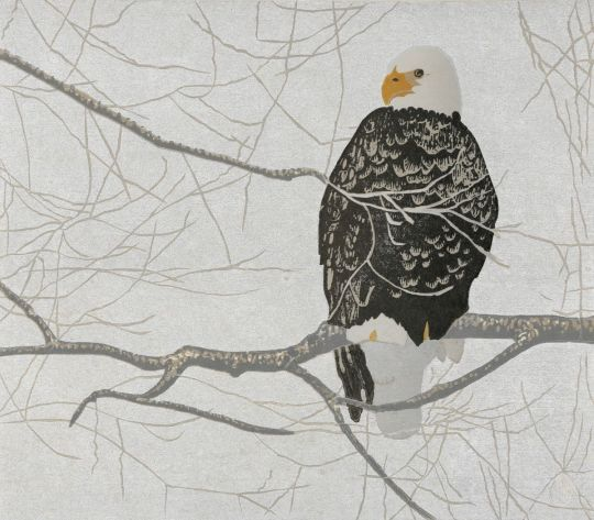 Bald Eagle perched against a winter sky