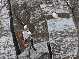 Puffins at the North Pole